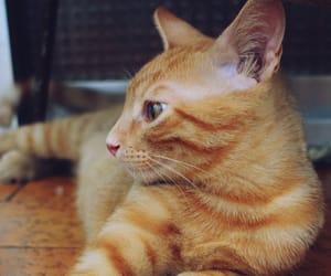 cat, beautiful, and nice image