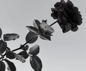 and, black and white, and flowers image