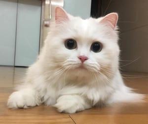 animals, cat, and beautiful image