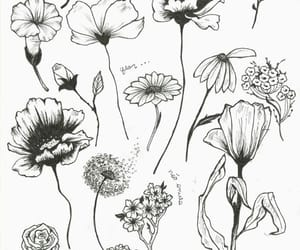 art, black and white, and flowers image
