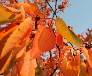 autumn, fall, and Herbst image