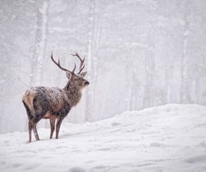 winter, deer, and forest image