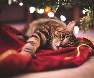 cat, christmas, and animal image