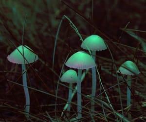 mushroom, nature, and glow image
