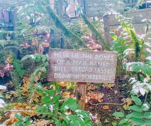 enchanted forest, nature, and signs image