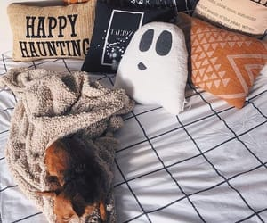 animal, autumn, and bed image
