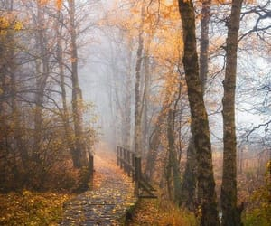 autumn, pathway, and fall image