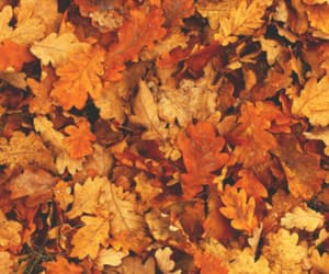 aesthetic, autumn, and leaves image