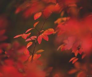 autumn, branch, and crimson image