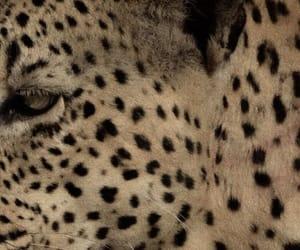 theme, rp, and animal image
