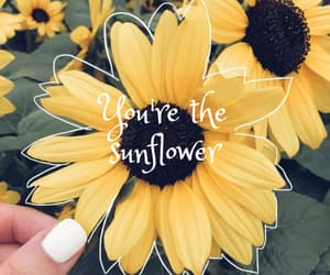 sunflower and post malone image