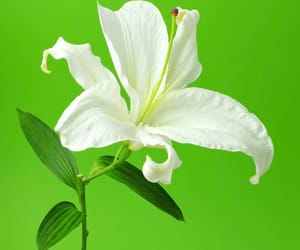flowers, green, and lime image