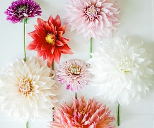 flowers, dahlia, and floral image