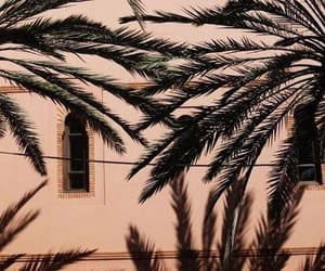 palms, tumblr, and aesthetic image