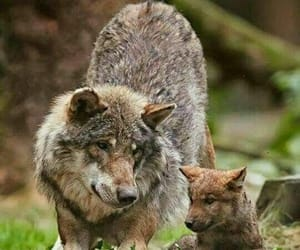 lovely, cute, and mother image