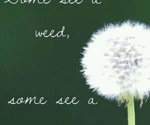 dandelion, positivity, and weed image