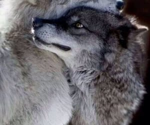 adorable, hugging, and mates image