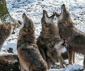 amazing, together, and howling image