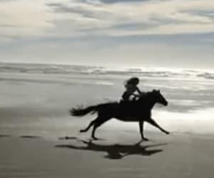 animal, beach, and freedom image