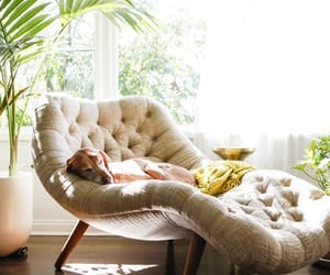 chair, dog, and home image