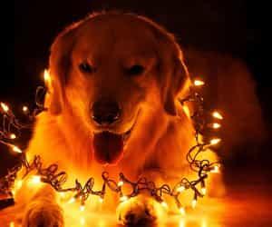 dog and light image