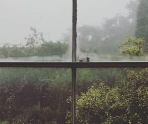 nature, rain, and window image