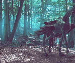 gif, harry potter, and thestral image