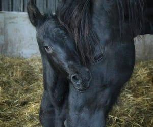 caballos, Animales, and granja image