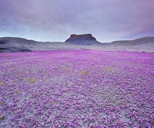 paisages flores deserto image