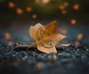 autumn, background, and beautiful image