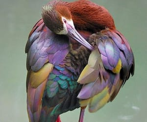 bird, feathers, and nature image