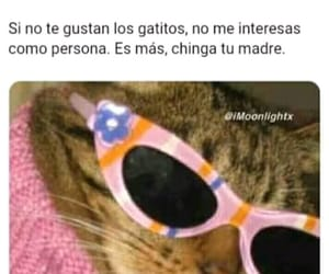 meme, gatitos, and momazo image