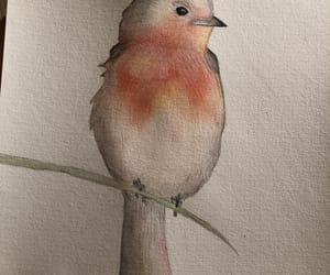aquarelle, bird, and draw image