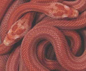 snake, red, and theme image