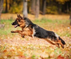 animal, walk, and dog image