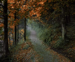 autumn, leaves, and trail image