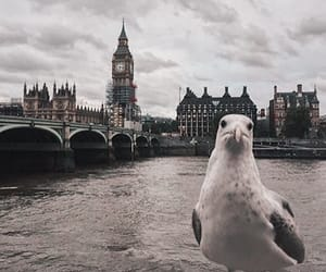 Big Ben, bird, and bridge image