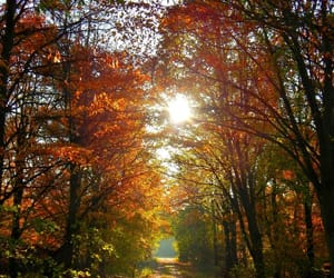autumn, beauty, and cold image