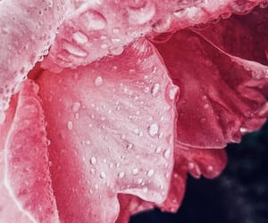 dew, purity, and rain image