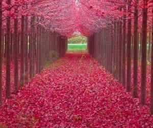 nature, landscape, and pink image