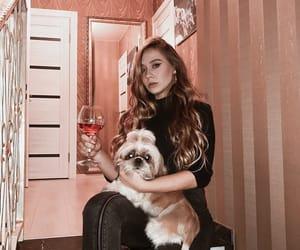 dog, luxury, and pink image