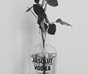 rose, vodka, and wallpaper image