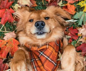 autumn, dog, and fall image