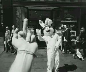 alternative, bunny, and fuck image