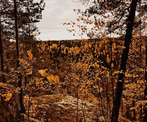 autumn, finland, and forest image