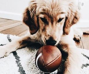 cuteness, dog, and golden retriever image