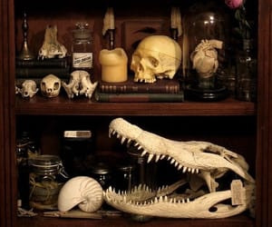 bones, potions, and witch image