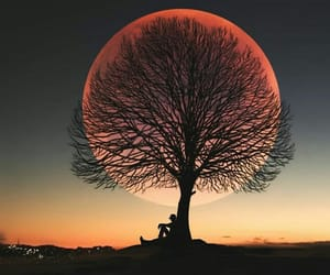 beautiful, moon, and tree image