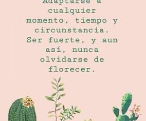 cactus and florecer image