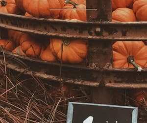 fall, pumpkins, and 🍁 image